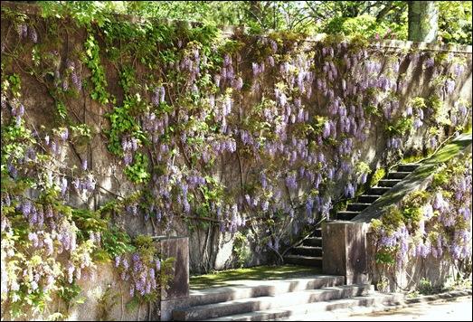 jardim serralves - porto - glicínias - escadaria