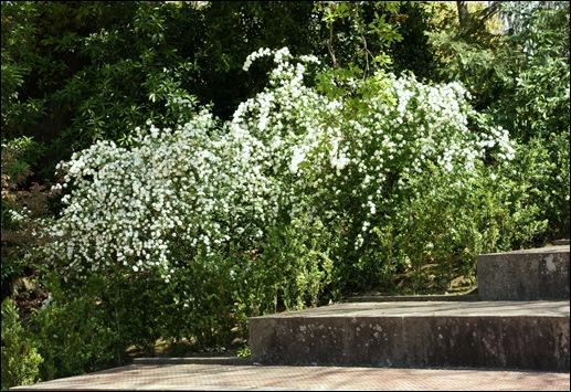 jardim serralves  - caminho com  flores 1