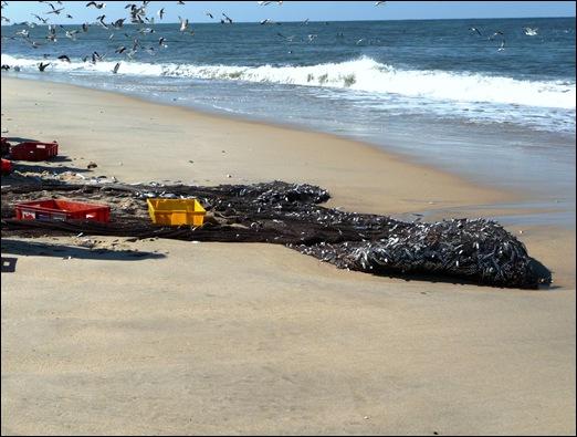 Praia de Mira - pesca 3