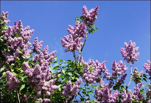 Linhares - flores