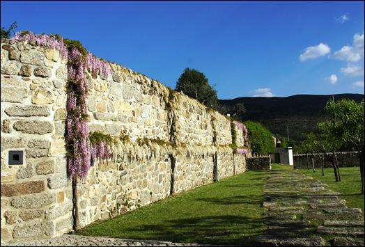 Linhares - inatel - muro com glicínias