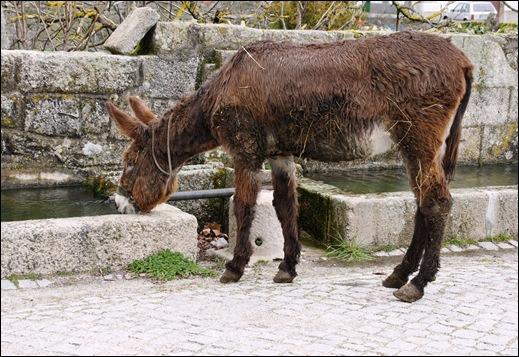Glória Ishizaka - Vila do Touro - bebedouro para animais - burrinho tomando agua