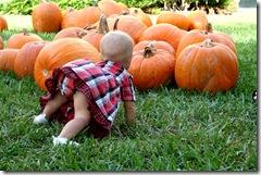 Pumpkin Patch 095 photoshop