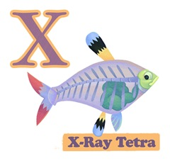 X Ray Tetra Page Final