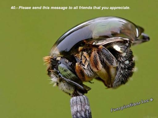 Send the message to all friends that you appreciate.