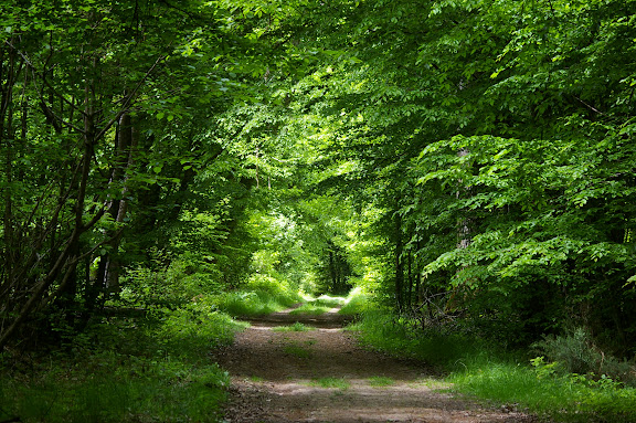 Forêt de Dreux près de Hautes-Lisières : biotope d'Anthocharis caradamines, de Pararge aegeria. 31 mai 2009. Photo : J.-M. Gayman