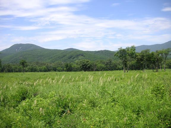 4 km à l'ouest de Anisimovka, 20 juillet 2010. Photo : J. Michel