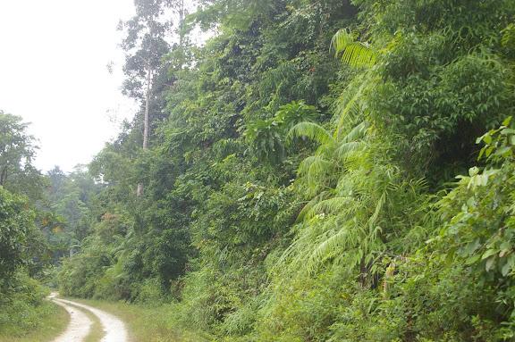 Biotope d'Hypolimnas bolina : la forêt à la sortie de Port Barton, Palawan (Philippines, 12 août 2005). Photo : Jean-Marc Gayman