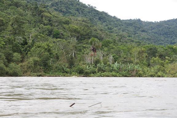 Sur le Madre de Dios (Pérou), au sud du confluent avec la Manu : les collines de Pantiacolla. 12 décembre 2008. Photo : Benoit Nabholz