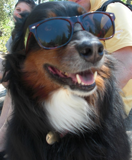 Cooper in Shades