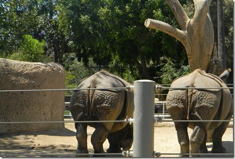 zoo 062