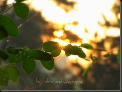 Gorgeous Sunrise!! 011