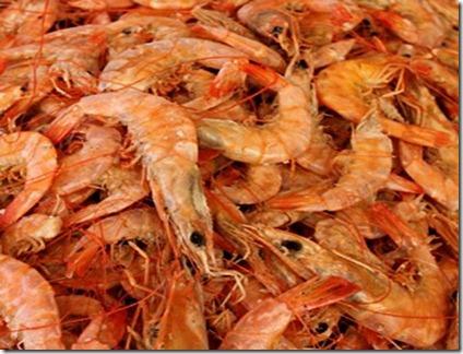 camarão seco