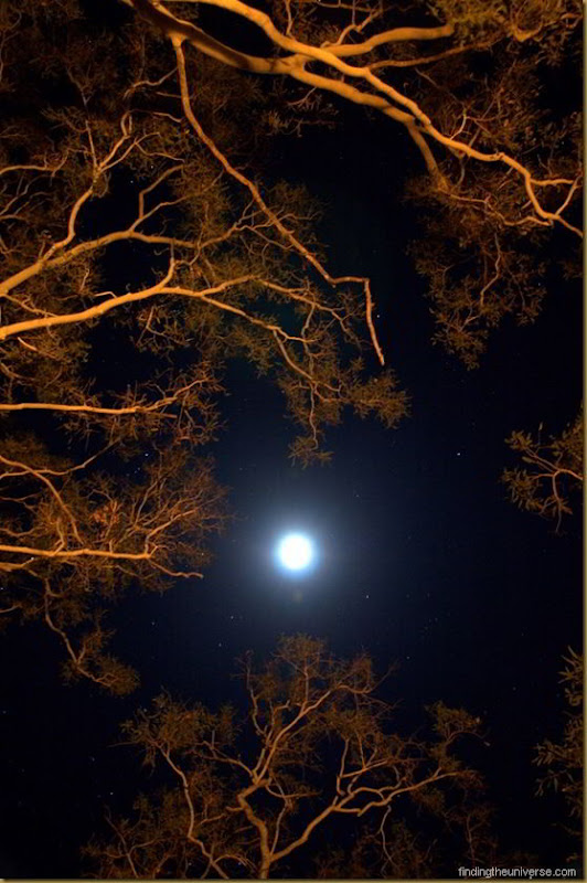 Moon and campfire lit trees