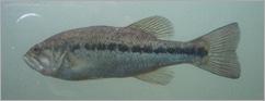 09112203zoo_fish