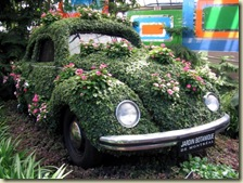 voiture-jardin-plante-insolite-coccinelle