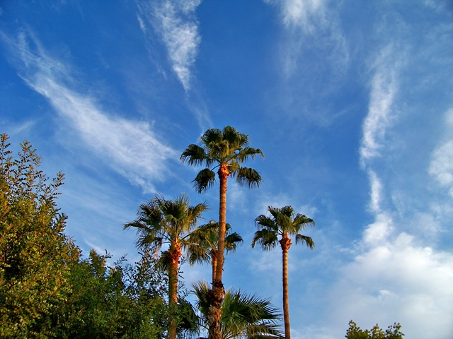 palm blue sky