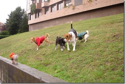 Con Toby, Lucky y Nano
