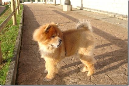 Lolo, el león alguacil