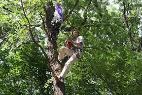 Гитарист на дереве.jpg