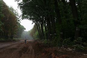 Незаконная вырубка, нумерованные деревья