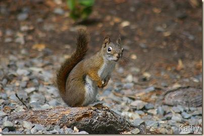 SquirrelYahk2