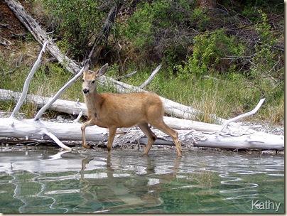 Deer #3