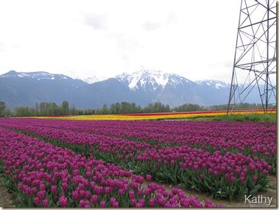 Tulip Festival 056