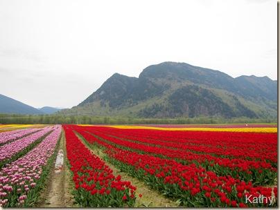 Tulip Festival 019