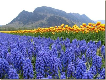 Tulip Festival 038