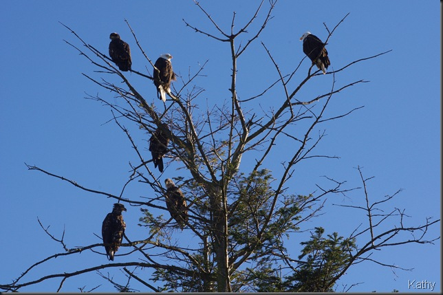 Eagles at the entrance