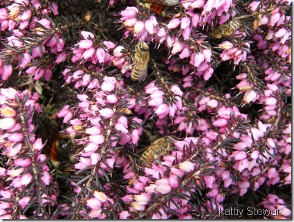 Bumblebees and Honey bees