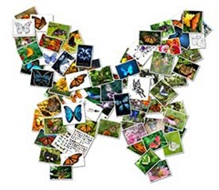online-collage-butterfly