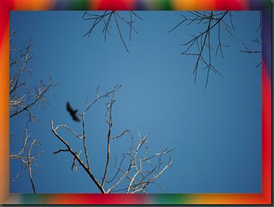 birdsky2