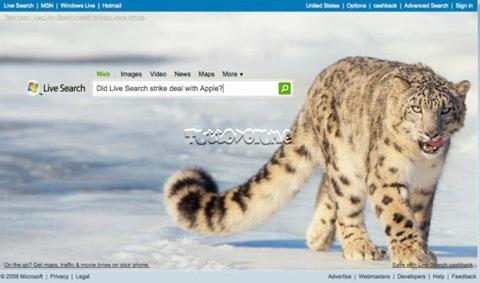 Snow_Leopard_610x355