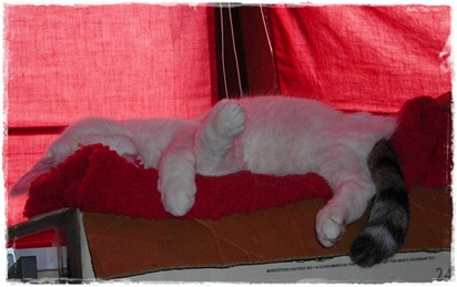 Katzen und Wolle 14.September