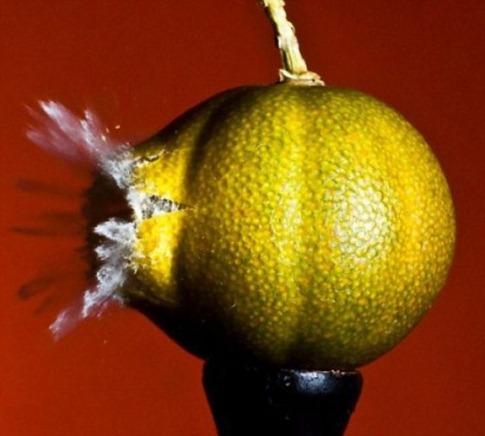 fotos alta velocidade desbaratinando tiros balas fruta 1