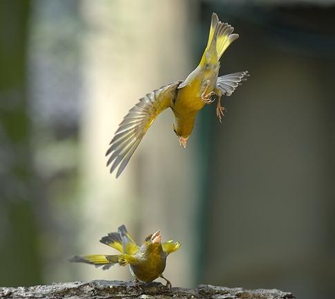 luta entre animais desbaratinando (3)