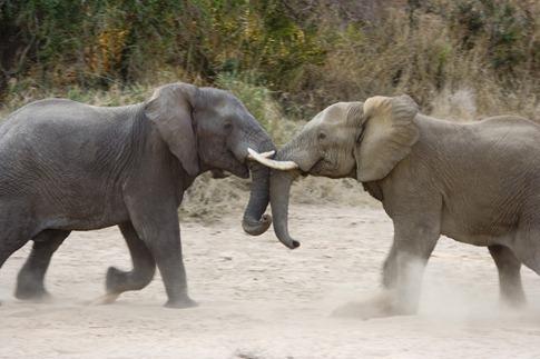 luta entre animais desbaratinando (8)