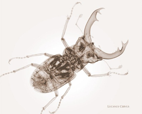 insects3