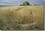 emptied-prairie