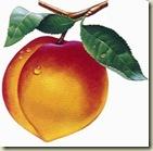 peach4