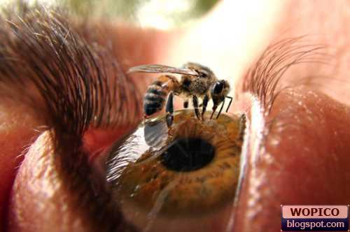 Eye and a Bee
