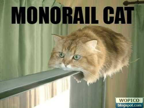 Monorail For Cat