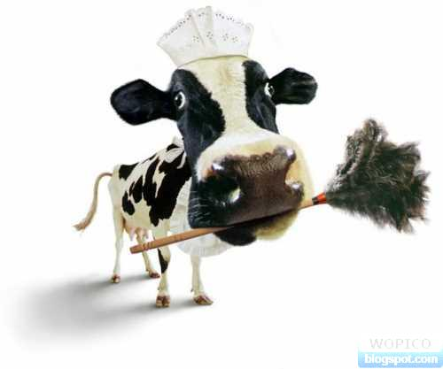 Cow Maid