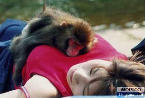 Lucky Mongkey