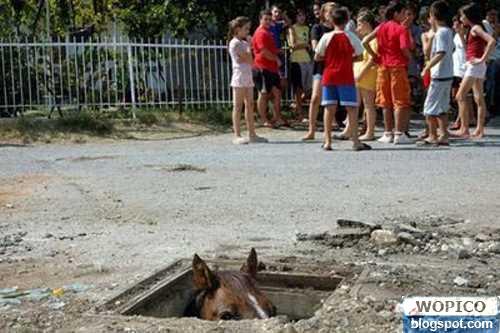 Traped Horse