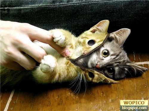 Kitty Skin
