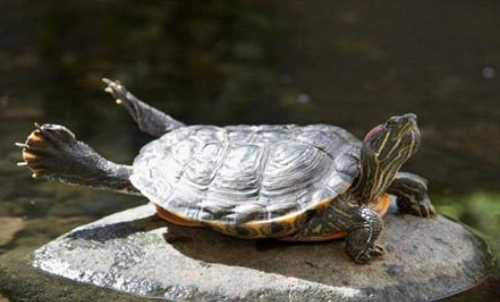 Turtle Streching