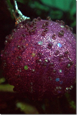 Close up Christmas 057.ARW
